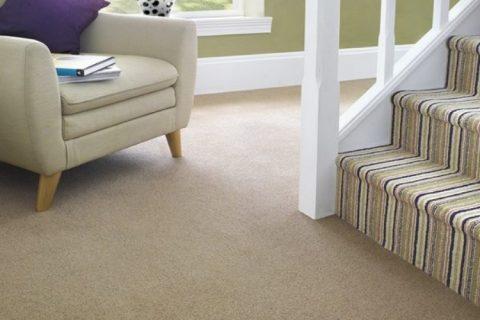 Patterned or Plain Carpet?
