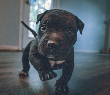 best floor for dogs - LVT